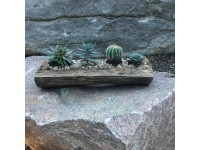 "Sensational Succulents ""Make and Take"" on June 1st"