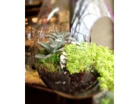 "Terrarium ""Make and Take"" on May 11th"