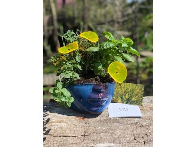 Gift Set 1 - Face Planter