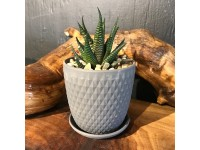 Succulent Planter Black 1
