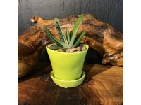 Succulent Planter Tika Lime Green