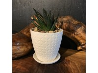 Succulent Planter White 1
